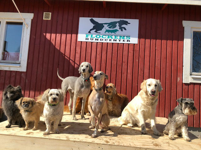 04. FLOCKENS HUNDCENTER